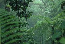 Pralesy