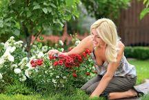 САДОВЫЕ РОЗЫ. Garden roses / Дача сад, огород, цветы, розы, розарий, розы посадка и уход, обрезка, размножение. Gardening, roses, planting, pruning, propagating, tips & tricks