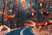•it's fall y'all•