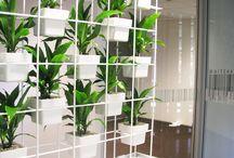 Interior (plants)