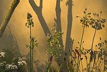 shadowplay in garden design