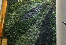 muros verde