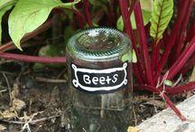 Beginning Gardener Tips