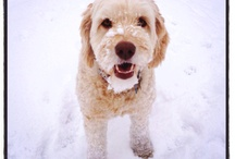 CHESNEY the Wonder Dog