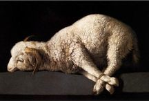 Sheep / by Lisa sims