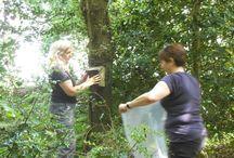 Ecological survey techniques