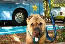 Dog pen diy outdoor