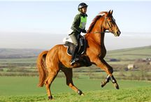 Training / Articles about training your endurance horse