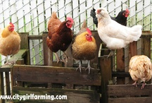 I (Heart) Chickens! / Chickens, real and otherwise...great ideas for backyard flock, cute things to make...all for the love of chickens.