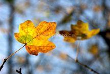 Herbst / Der Herbst ist da. Die Blätter färben sich und der Wind treibt sie umher. Der Wind weht einem um die Nase. Die Zeit für einen heißen Tee ist angebrochen.  The autumn is back. The leaves turn and the wind pushes it around. The wind was blowing around the nose. The time for a hot tea has arrived.