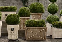 Planters I Like / by Robin Griffin