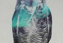 Double Exposure Portraits Of Animals In The Aurora Borealis