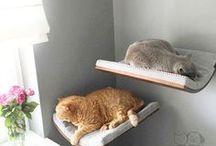 katten ligplasysen
