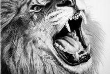 Leo / Lion pictures