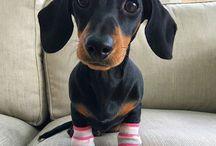Get a looooong lil' doggy...