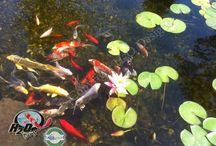 Solving Pond Problems