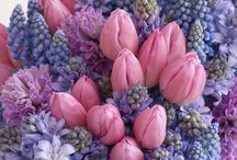 Flower themes - lavender pink