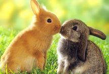 Rodger Rabbit