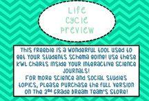 3rd Grade Life Science / by Teresa Merckle