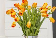 Flowery / by Backyard Industry