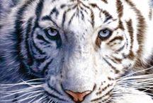 Tiger♡