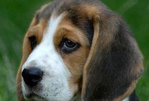 Pups / by Monica Rai