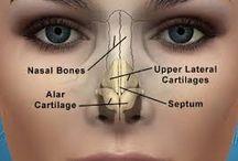 Anatomi Ve Öncesi Sonrası