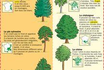 Arbre et forêt
