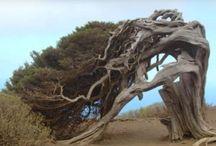 copaci deosebiti