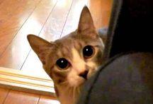 Kitty Purry