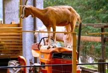Funny Tractor Pics