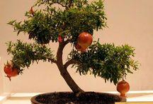 نبات واشجار