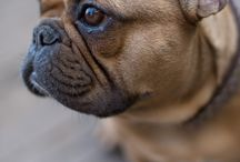 Dog's♡ / by hardik bafna