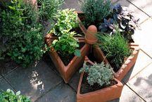 Warzywniak na balkonie