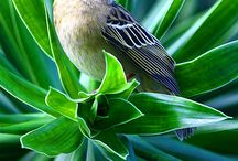 Birds & Birdies