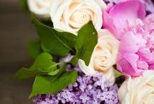 Flowers / Flowers / Blumen