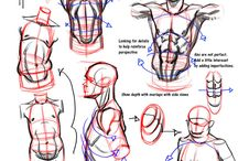 Upper body anatomy
