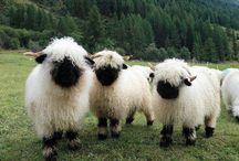 goats / by Melinda Rieck
