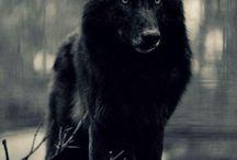 Wolfie :3