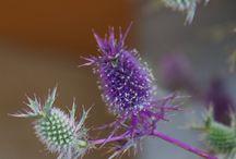 Native Flora of Texas