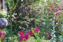 garden / tuin de krosenbrink / foto's gemaakt uit mijn eigen tuin