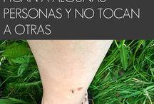 razones por que pican misquitos