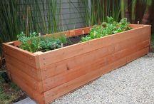 Going Green-Gardening / by A Bark