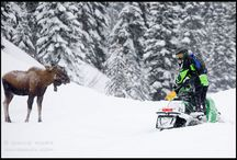SnoMo / Snowmobile stuff! Use PingPal so you don't get lost on the mountains. And with these kind of horsepower you can get lost very fast.