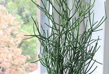 Plants / Rosliny