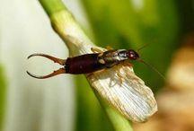 Insecten / Bekijk uitgebreide uitleg over verschillende insecten via:  http://www.animalsunited.nl/alle-dieren/insecten/
