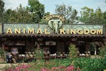 Disney World Animal Kingdom °o°