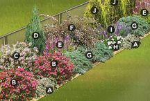 Jardin fleurs
