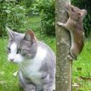 Cats & Animals / by Suzanne Klein