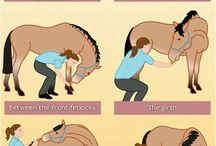 horse stretches